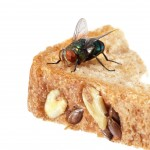 Insects Entering into Cafe